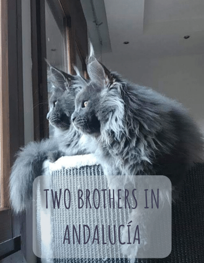 2brothers2
