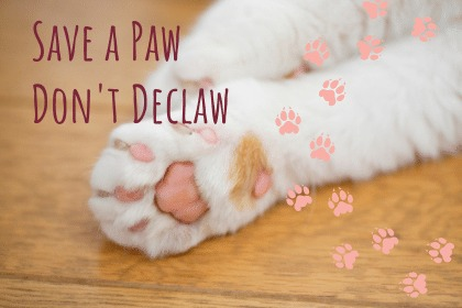 Save a paw. Don't declaw