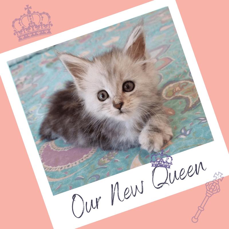 Queen Daisy